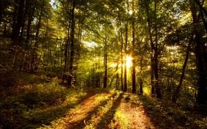 forest_sun_wallpaper_landscape_nature_wallpaper_1440_900_widescreen_1080.jpg
